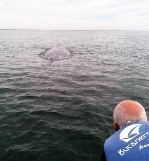 rencontre avec la baleine dans la Basse Californie Sud, parmi les dernières aventures guide francais mexique