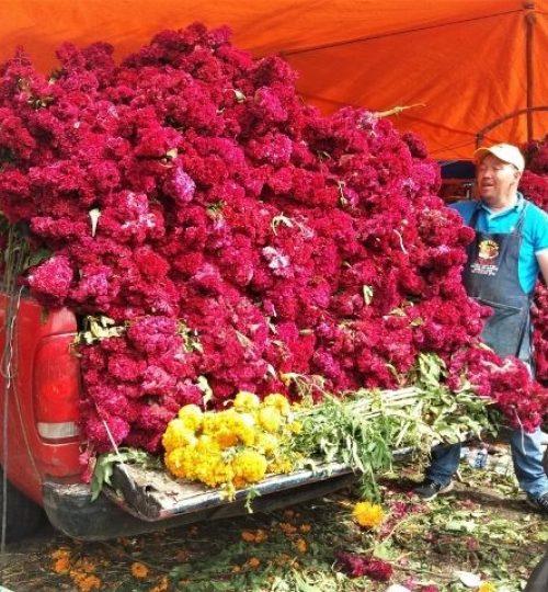 le cempasúchil, la fleur par exellence de la fête des morts au Mexique. dernières aventures guide francais mexique